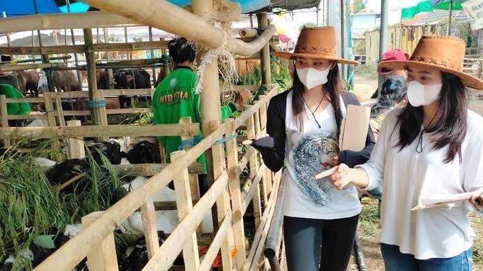 SPG Cantik Berpakaian Ala Koboi Bantu Jual Hewan Kurban, Pedagang Laku Keras: Hewan Banyak Diborong