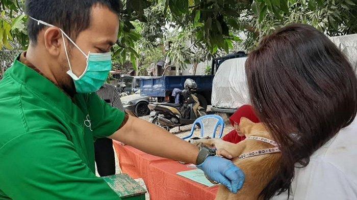 Dalam 3 Hari, 687 Ekor Hewan Sudah Divaksin Rabies di Jakarta Timur