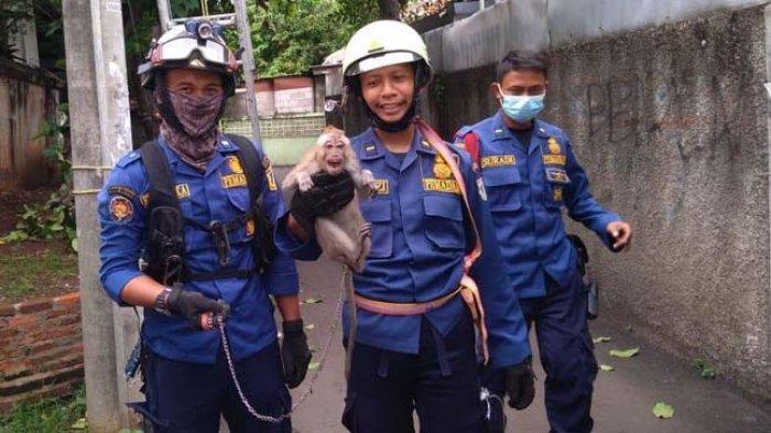 Tersangkut di Atas Tiang Listrik, Sudin PKP Jakarta Timur Berhasil Evakuasi Anak Monyet