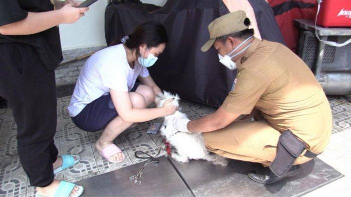 Pelayanan Kesehatan dan Vaksinasi Rabies Gratis Untuk Hewan Peliharaan di Jakarta, Catat Tanggalnya