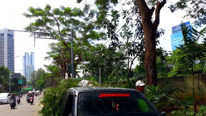 Antisipasi Tumbang dan Sebabkan Korsleting Listrik, 4 Pohon di Pesanggrahan Dipangkas