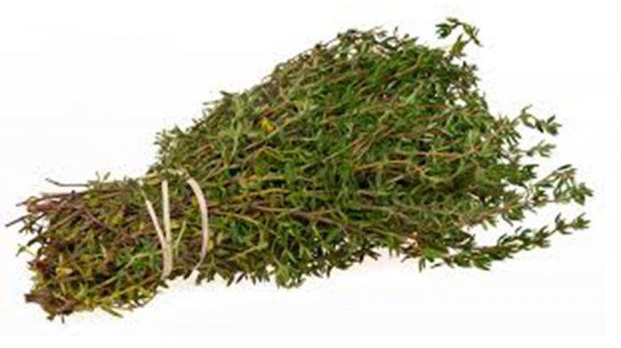 Thyme merupakan salah satu jenis rempah daun asal Mesir yang sangat terkenal. Daunnya mungil, bentuknya oval kecil dengan tangkai kecil.