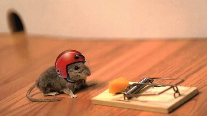 Ketahui 6 Hal yang Mengundang Tikus Masuk Rumah, Simak Cara Mudah Mengusirnya