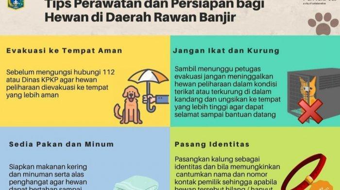 Warga Jakarta, Bisa Hubungi Kontak Ini Untuk Pelayanan Kesehatan Hewan yang Terdampak Banjir