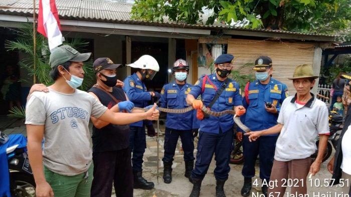 Aksi Petugas Damkar Tangkap Ular Berbisa Sembunyi di Puing-puing Bangunan Rumah Warga di Lebak Bulus
