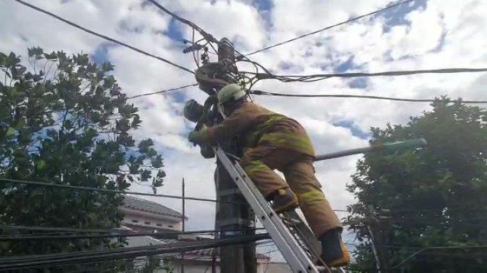 Ular Sanca Sepanjang 3 Meter Dievakuasi dari Tiang Listrik di Cipayung