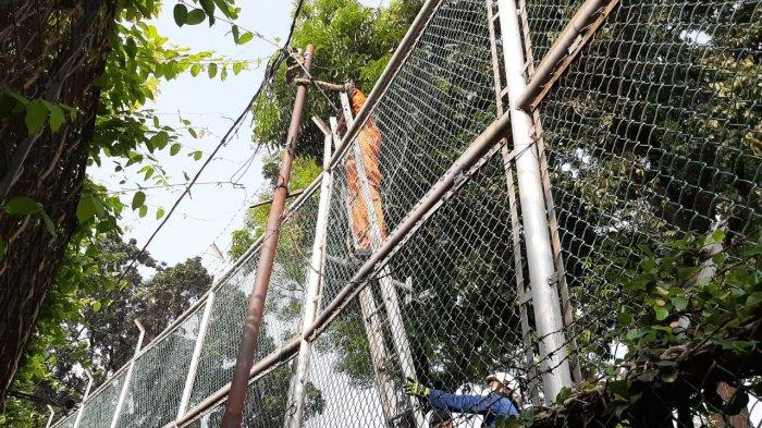 Petugas Pemadam Kebakaran Cilandak Evakuasi Ular Sanca 3 Meter yang Melilit di Tiang