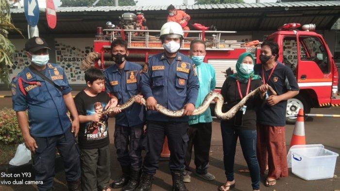 Petugas damkar mengevakuasi ular sanca di tiang listrik di kawasan Cilandak Barat, Cilandak, Jakarta Selatan pada Jumat (14/5/2021).