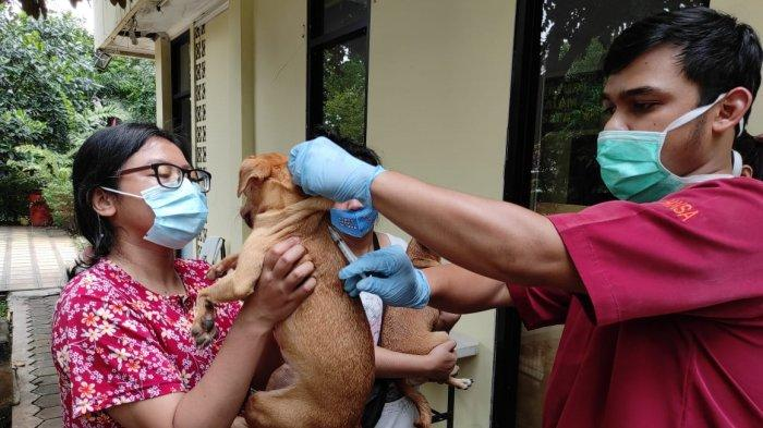 4 Bulan Lalu Digigit Anjing Tanpa Diobati, Pasien di Kalbar Meninggal Suspek Rabies