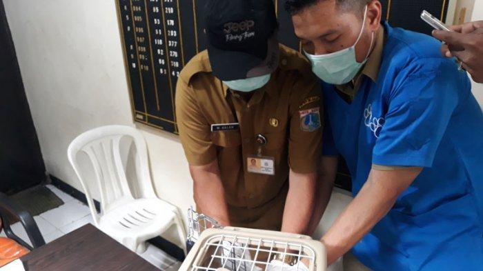 Warga Manggarai Selatan Punya Hewan Peliharaan? Yuk Ikut Vaksin Rabies Gratis Tanggal 5 April 2018