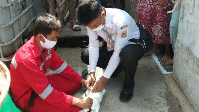 Ratusan Hewan Penular Rabies di Kepulauan Seribu Dapat Vaksin dari Suku Dinas KPKP