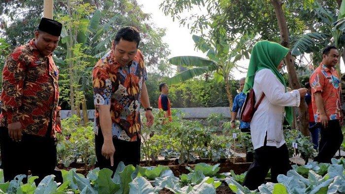 Pemkot Tangerang Kuatkan Perekonomian Rakyat dari Memanen Sayur Mayur di Karawaci