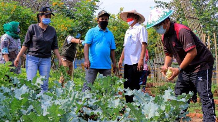 Program Ketahanan Pangan di Kota Tangerang Membuahkan Hasil, Warga Terdampak Covid-19 Mulai Panen