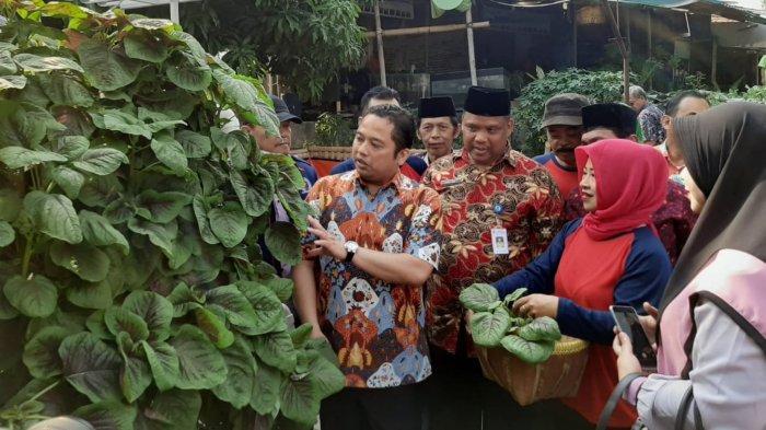 Wali Kota Tangerang Panen Berbagai Macam Tanaman di Kampung yang Dulunya Kumuh