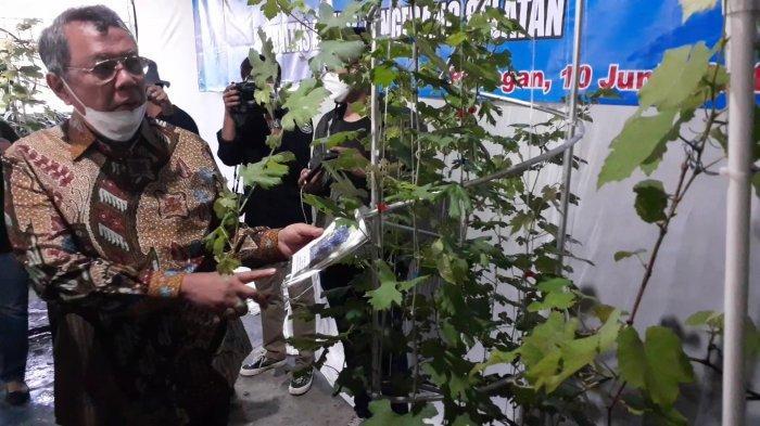 Wali Kota Benyamin Davnie: Tangsel Harus Kita Jadikan Kota Anggur