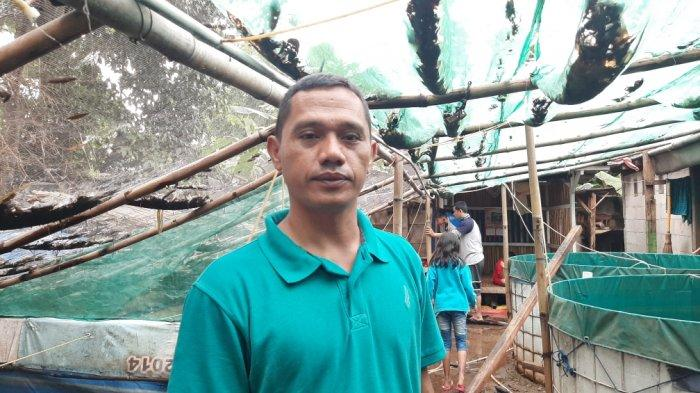 Cerita Wandi, Tambak Ikan Terimbas Banjir: Gagal Panen Ikan Lele, Kerugian Capai Belasan Juta Rupiah