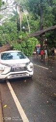 Sebuah mobil X- Pander putih tertimpa pohon Mahoni berukuran 10 meter di Jalan Taman Cut Mutiah pada Jumat (23/7/2021).