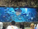 acara-feeding-show-di-sea-world-1.jpg