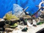 akuarium-sampah-plastik-di-sea-world-ancol.jpg