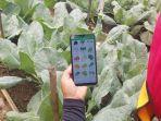 aplikasi-digital-sistem-informasi-pertanian-indonesia-sipindo.jpg