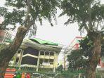 beberapa-batang-pohon-besar-di-kawasan-jalan-kramat-raya-jakarta-pusat.jpg