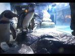 beberapa-koleksi-satwa-di-jakarta-aquarium-saat-tutup-dari-kunjungan-publik-selasa-1592020.jpg