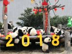 chinese-new-year-year-of-the-dog_20180216_150650.jpg
