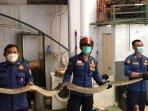 damkar-cilandak-ular-6-meter.jpg
