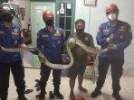 damkar-foto-sama-ular.jpg