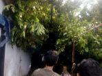 evakuasi-pohon-kapuk-dinkalbar.jpg