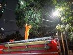 evakuasi-sarang-tawon-setiabudi.jpg