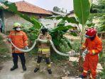 evakuasi-ular-di-jakarta-timur-kecamatan-ciracas-jumat-8102021.jpg