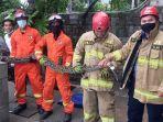 evakuasi-ular-sanca-sepanjang-5-meter-diekayon-pasar-rebo-jakarta-timur-minggu-442021.jpg