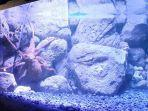 giant-pasific-octopus.jpg