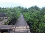 hutan-mangrove_20180318_091144.jpg