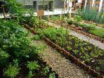ilustrasj-berbagai-jenis-sayuran-dan-tanaman-herbal-tumbuh-di.jpg