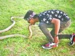 king-kobra_20180711_184259.jpg
