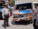 mobil-pikap-mitsubishi-menewaskan-tiga-pemburu.jpg