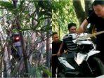 motor-nyangkut-di-pohon-bambu.jpg