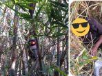 motor-nyangkut-di-pohon-bambu24.jpg