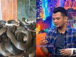 panji-petualangan-beberkan-cara-aman-menghindari-ular.jpg