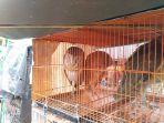 pasar-hewan-jatinegara_20180205_162447.jpg