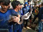 pasukan-biru-tangkap-ular-sanca-sepanjang-empat-meter-pada-saluran-air.jpg