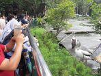 pengunjung-kebun-binatang-ragunan-rabu-25122019.jpg
