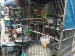 penjualan-love-bird-di-pasar-hewan-jatinegara-jakarta-timur-1.jpg