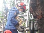 petugas-damkar-saat-evakuasi-kucing-yang-terjebak-di-atas-pohon.jpg