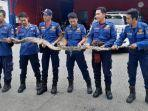 petugas-pemadam-kebakaran-damkar-memegang-ular-hasil-tangkapan-sanca.jpg