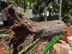 pohon-besar-roboh-menimpa-satu-rumah-di-jalan-sumenep-kecamatan-menteng-jakarta-pusat.jpg
