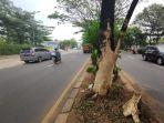 pohon-rindang-diduga-menjadi-penyebab-kecelakaan-di-jalan-raya-juanda-kota-depok.jpg