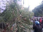 pohon-tumbang-di-jalan-ir-juanda-kota-bekasi-1.jpg